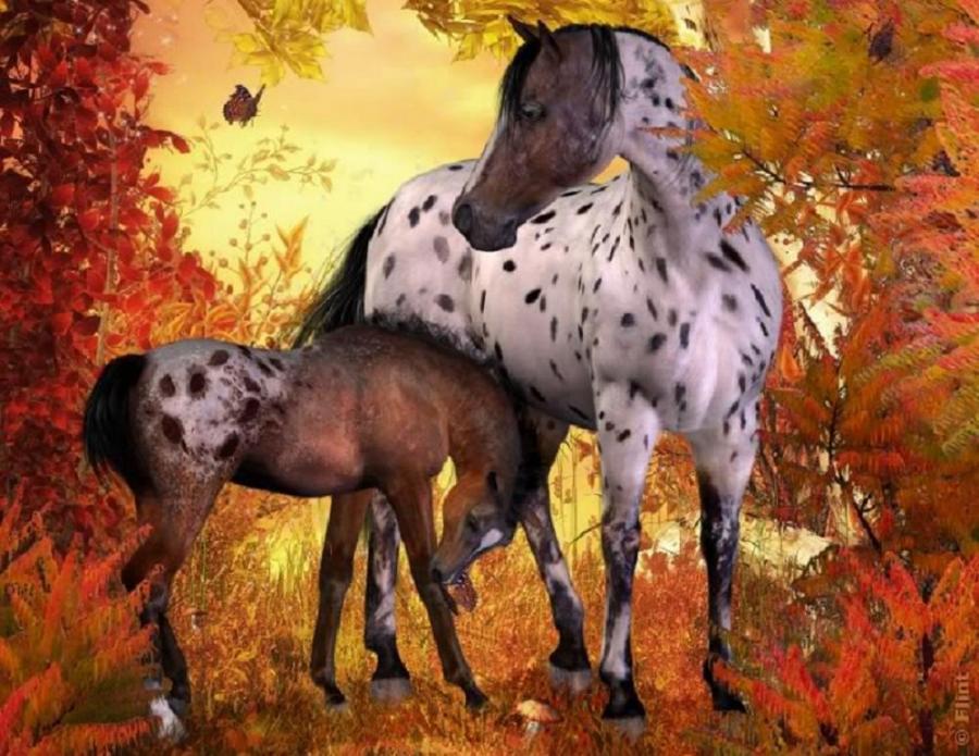 fall horse wallpaper wallpapersafari
