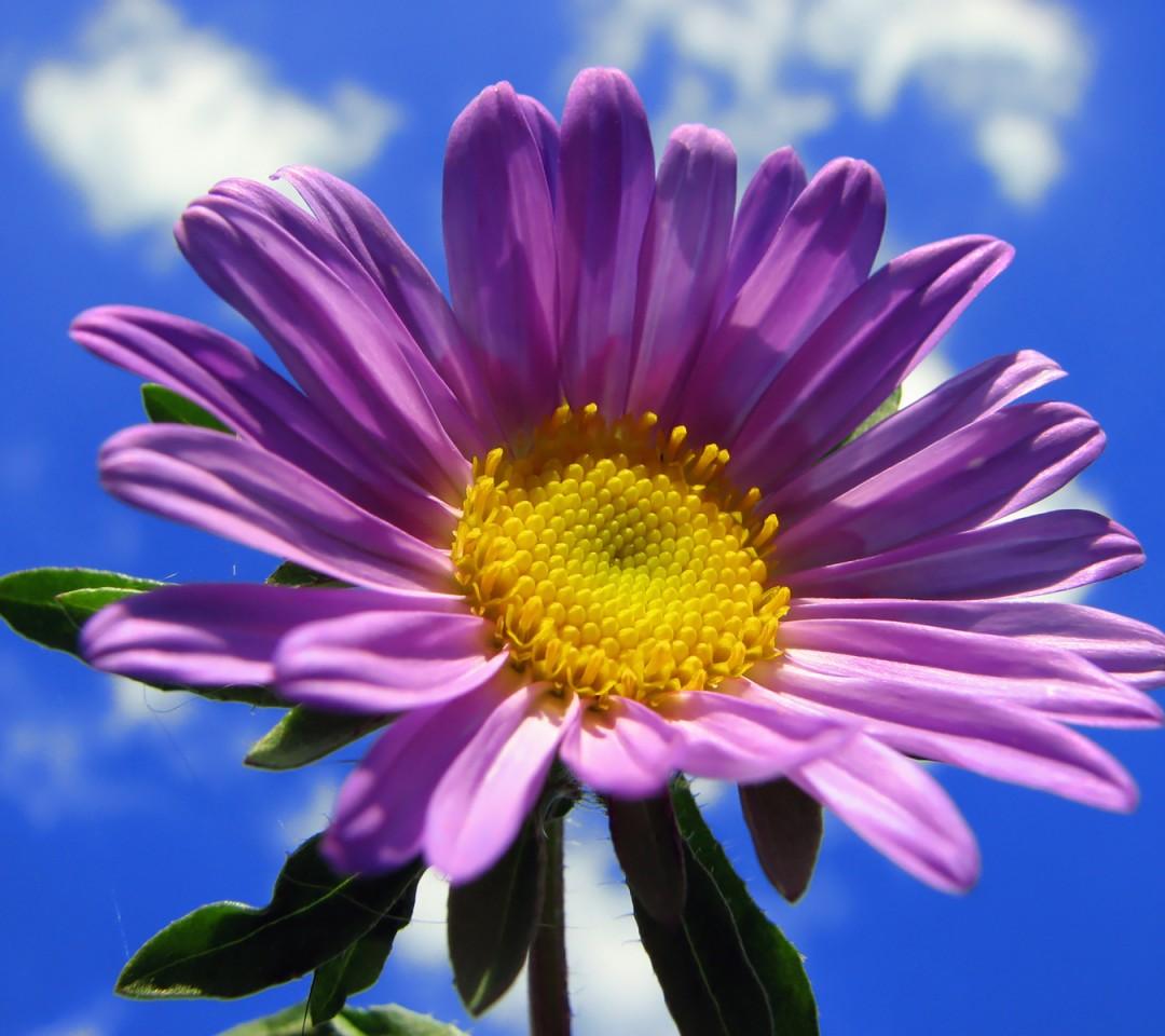 voor wallpapers screen savers flowers purple screensavers flower 1080x960