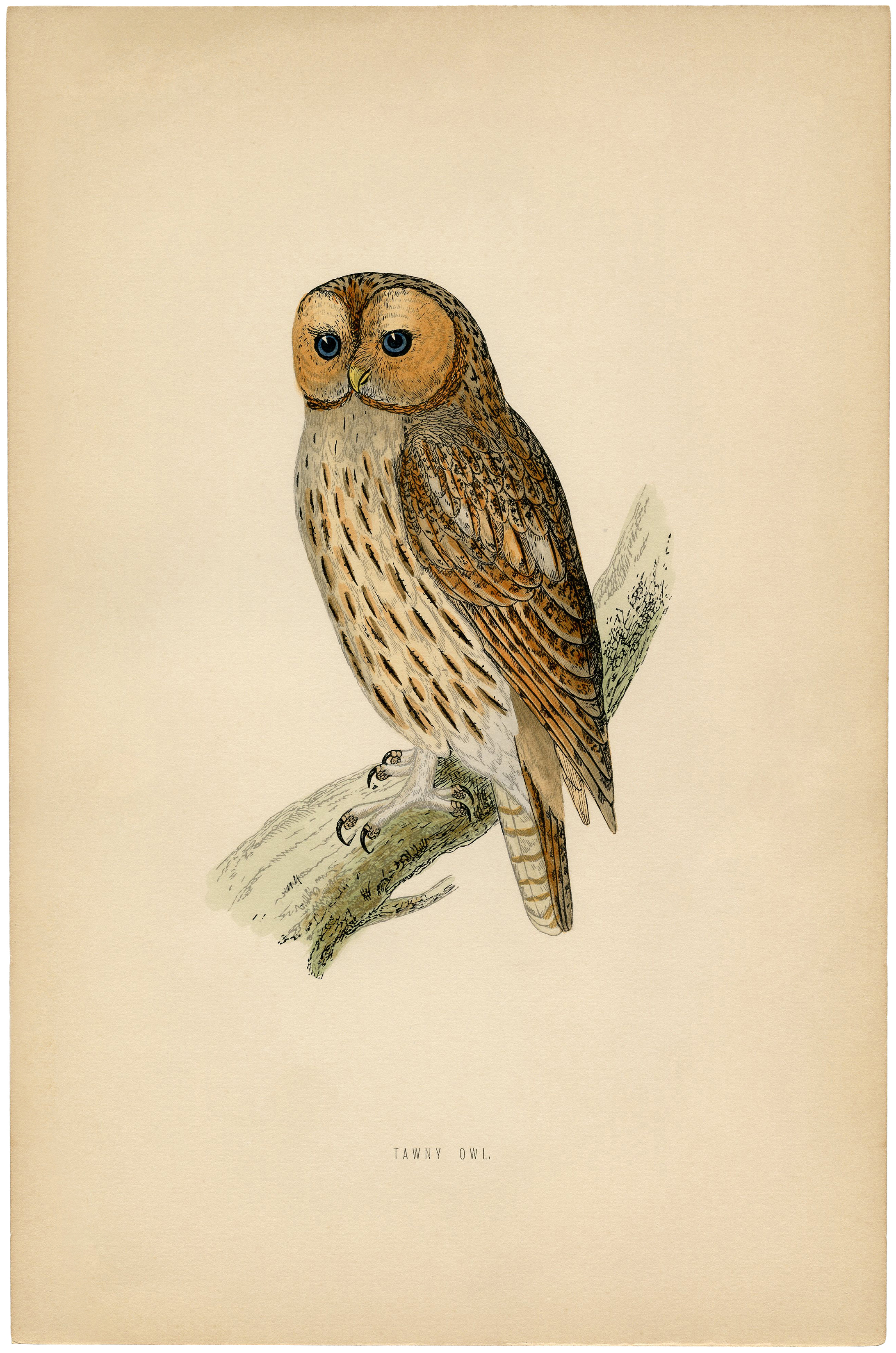 Vintage Printable Owl Images   The Graphics Fairy 2185x3300