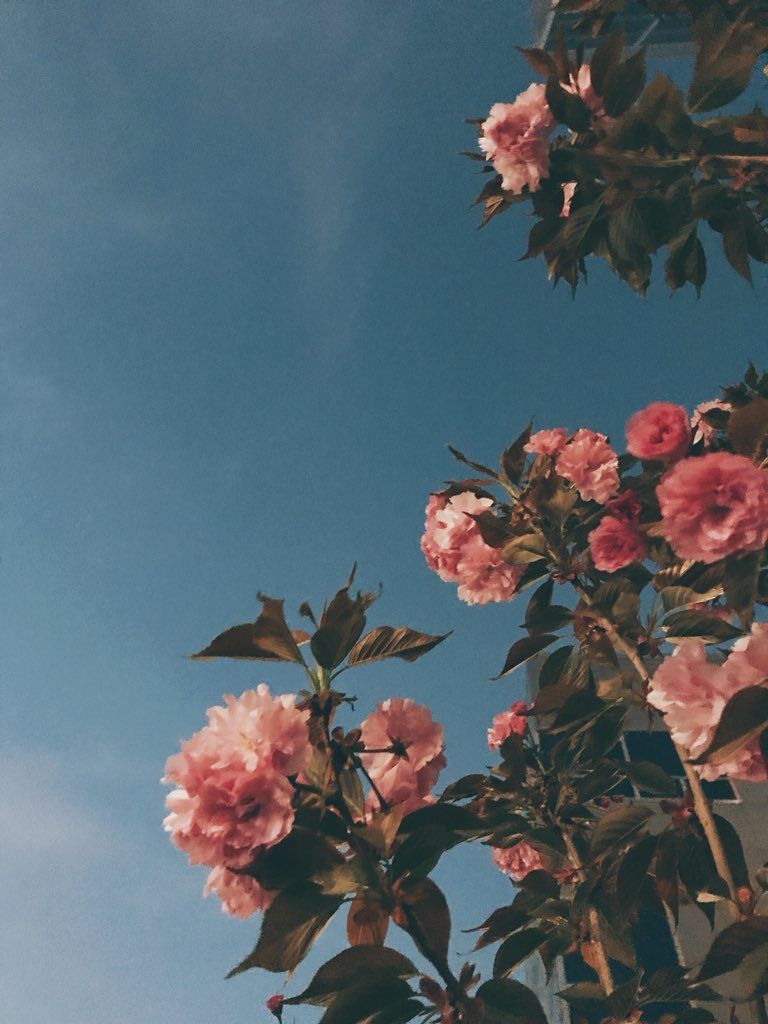 Flower f l o r a Flowers Aesthetic wallpapers Flower wallpaper 768x1024
