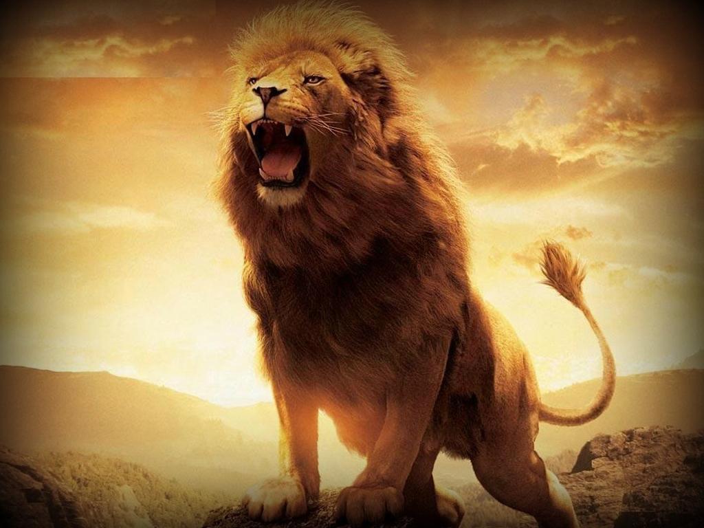 94 Lion Roar Wallpapers On Wallpapersafari