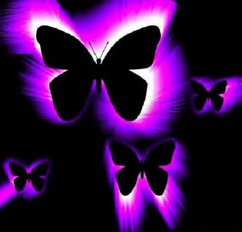 47 Pink And Purple Butterfly Wallpaper On Wallpapersafari