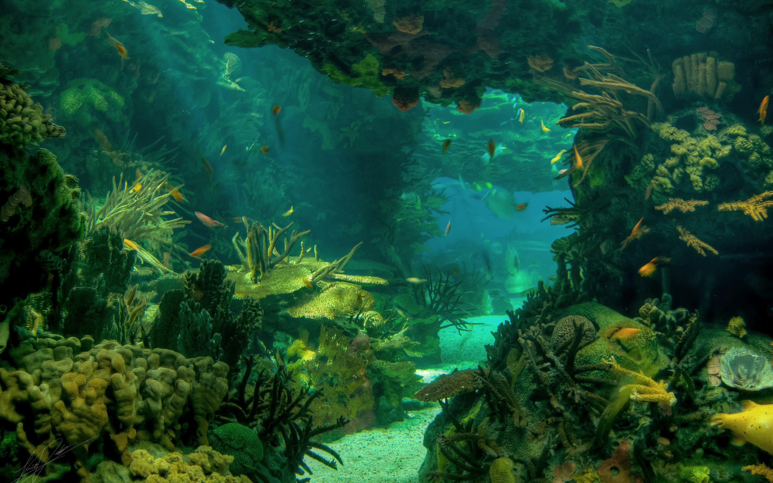underwater painting plants - HD2560×1600