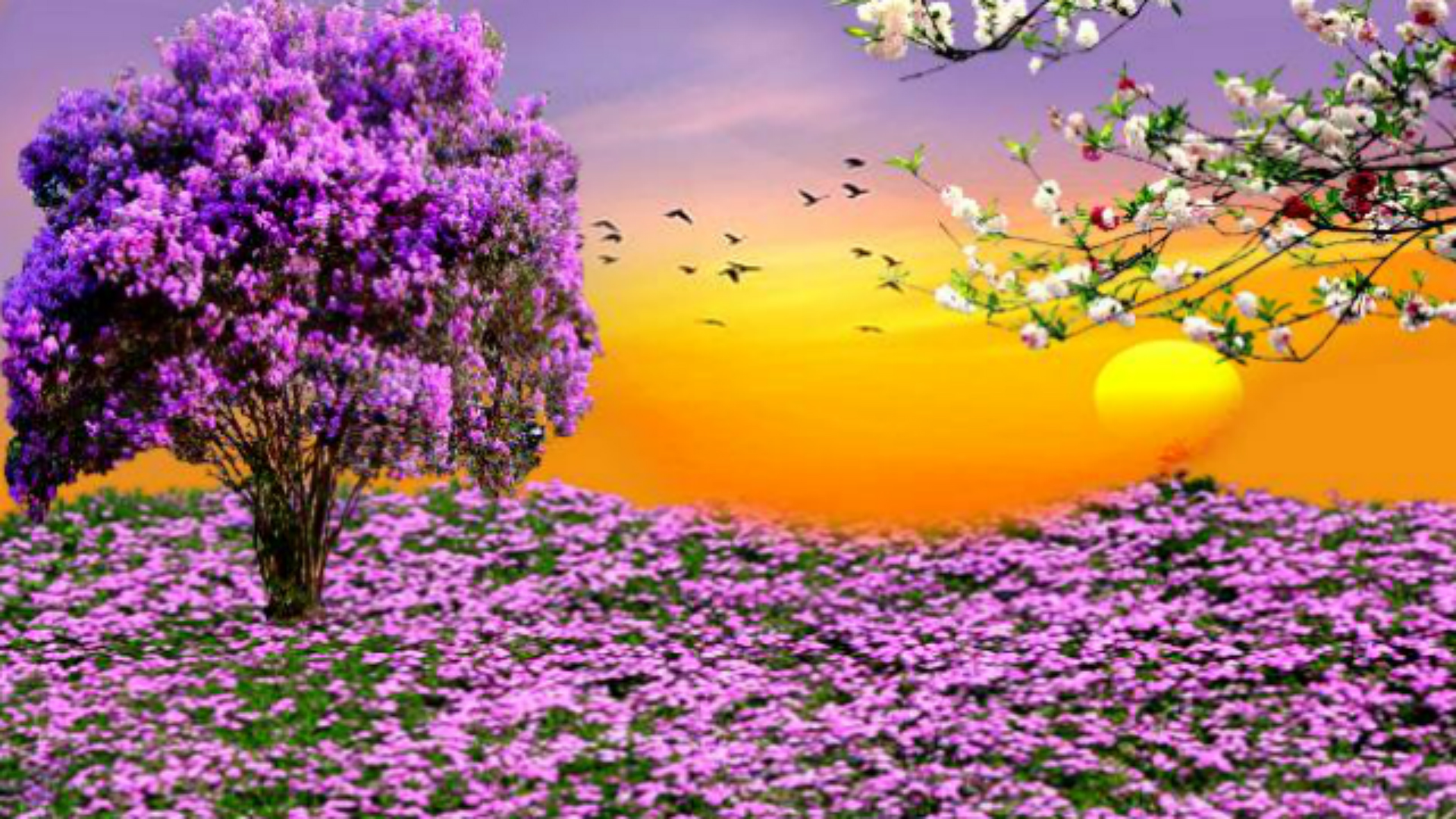 Nature Spring Purple Flowers Garden Sunset HD Wallpapers For Desktop 1920x1080