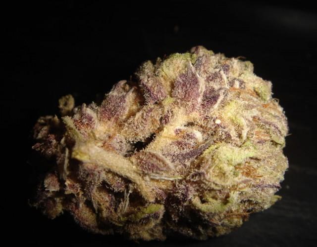 blackberry weed - photo #36
