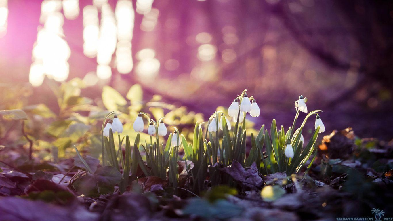 Early Spring Wallpapers 1366x768