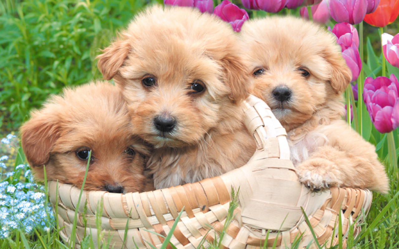 Puppies images Little Sweethearts wallpaper photos 22410132 1280x800