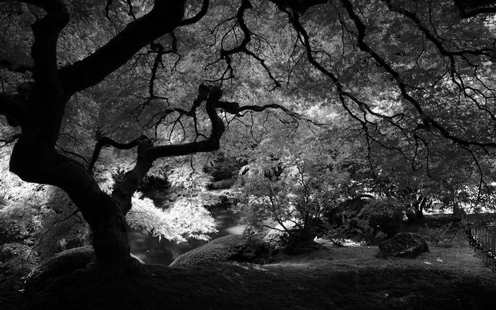 74 Black And White Nature Wallpaper On Wallpapersafari