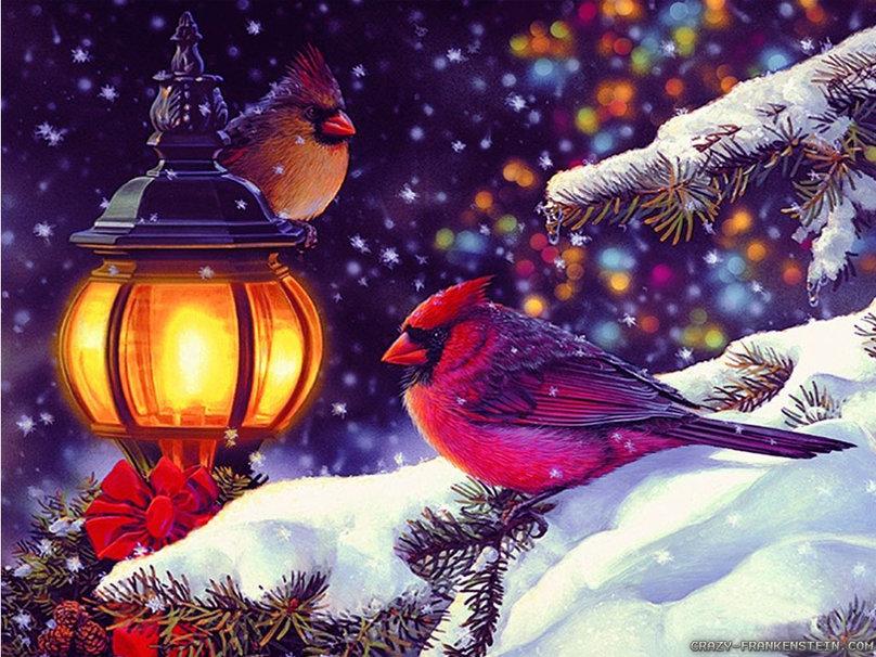 bird scene winter holidays wallpaper   ForWallpapercom 808x606
