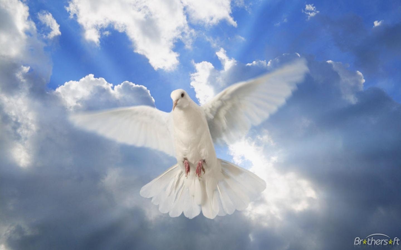 Download Dove of Peace Wallpaper Dove of Peace Wallpaper 1440x900