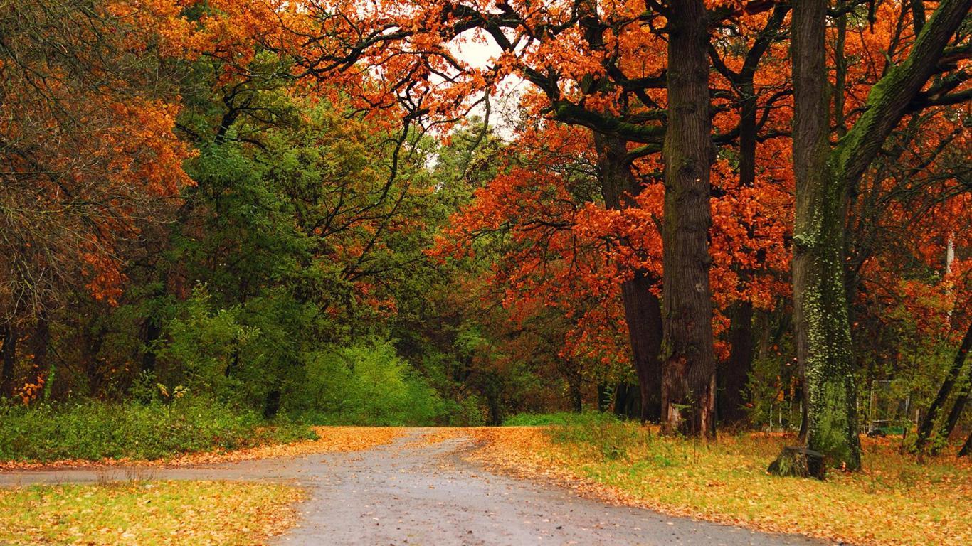 Fall Foliage Wallpaper For Desktop
