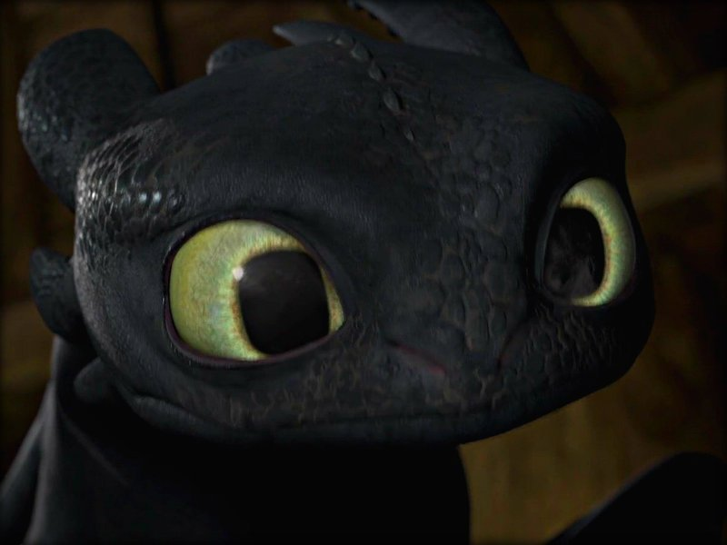 Toothless   Toothless the Dragon Wallpaper 33005406 800x600