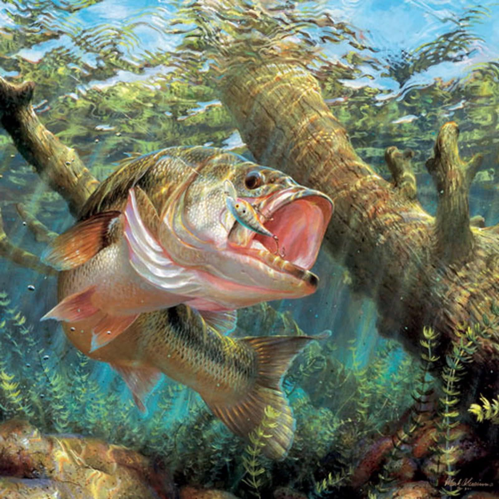 fish sport water fishes underwater lake river artwork bass wallpaper 1600x1600