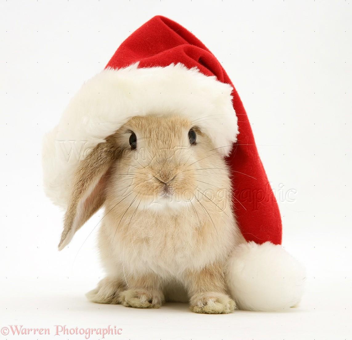 christmas bunny wallpaper   wallpapersafari