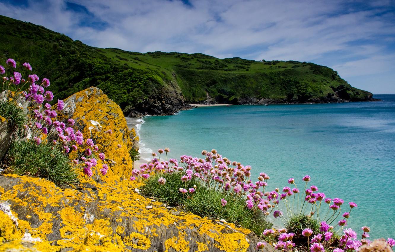 Wallpaper sea flowers stones rocks coast UK Cornwall 1332x850
