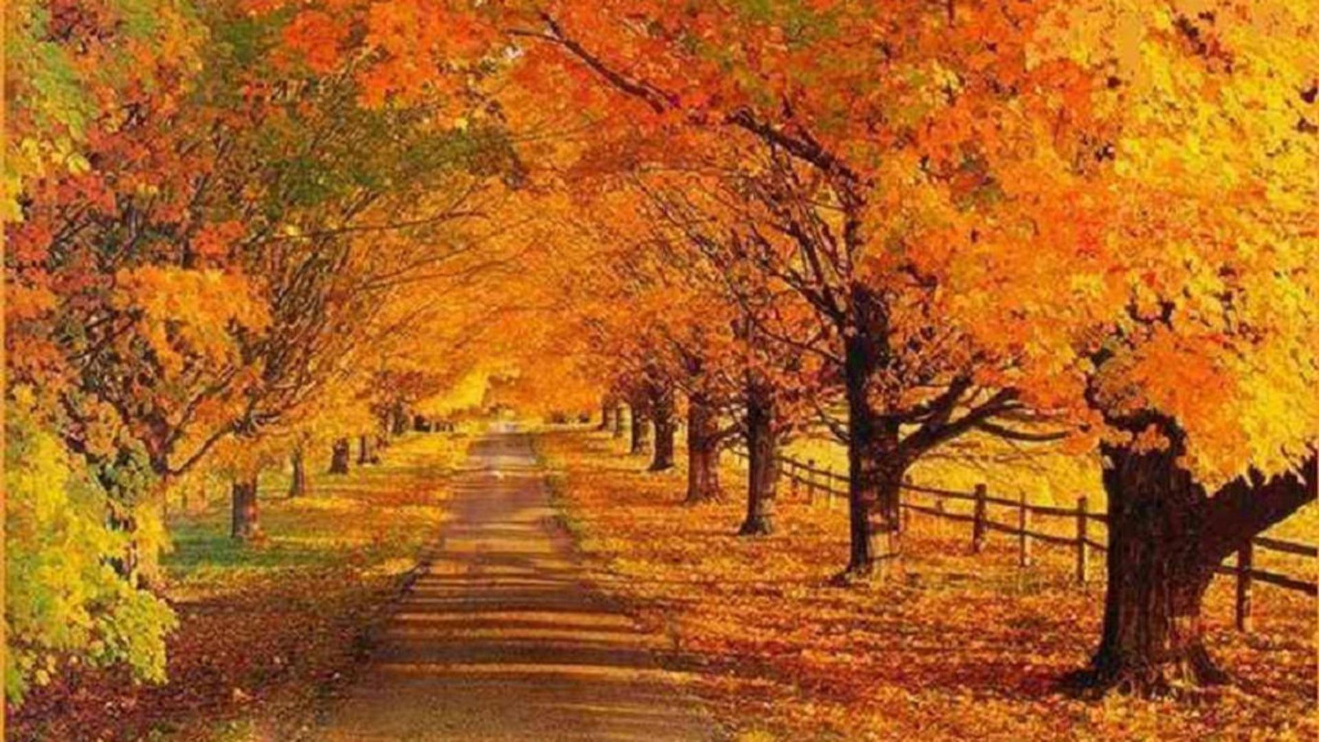 Autumn Scenes Wallpaper Landscapes - WallpaperSafari