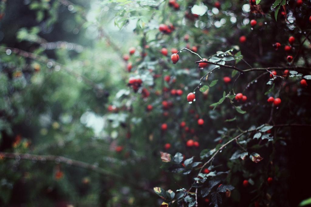 Rainy fall wallpaper wallpapersafari - Rainy nature hd wallpaper ...