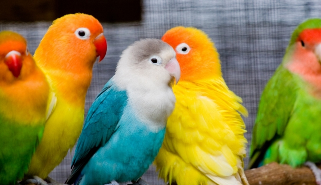 Colorful Birds Wallpaper   Easy Pic Download 1024x590