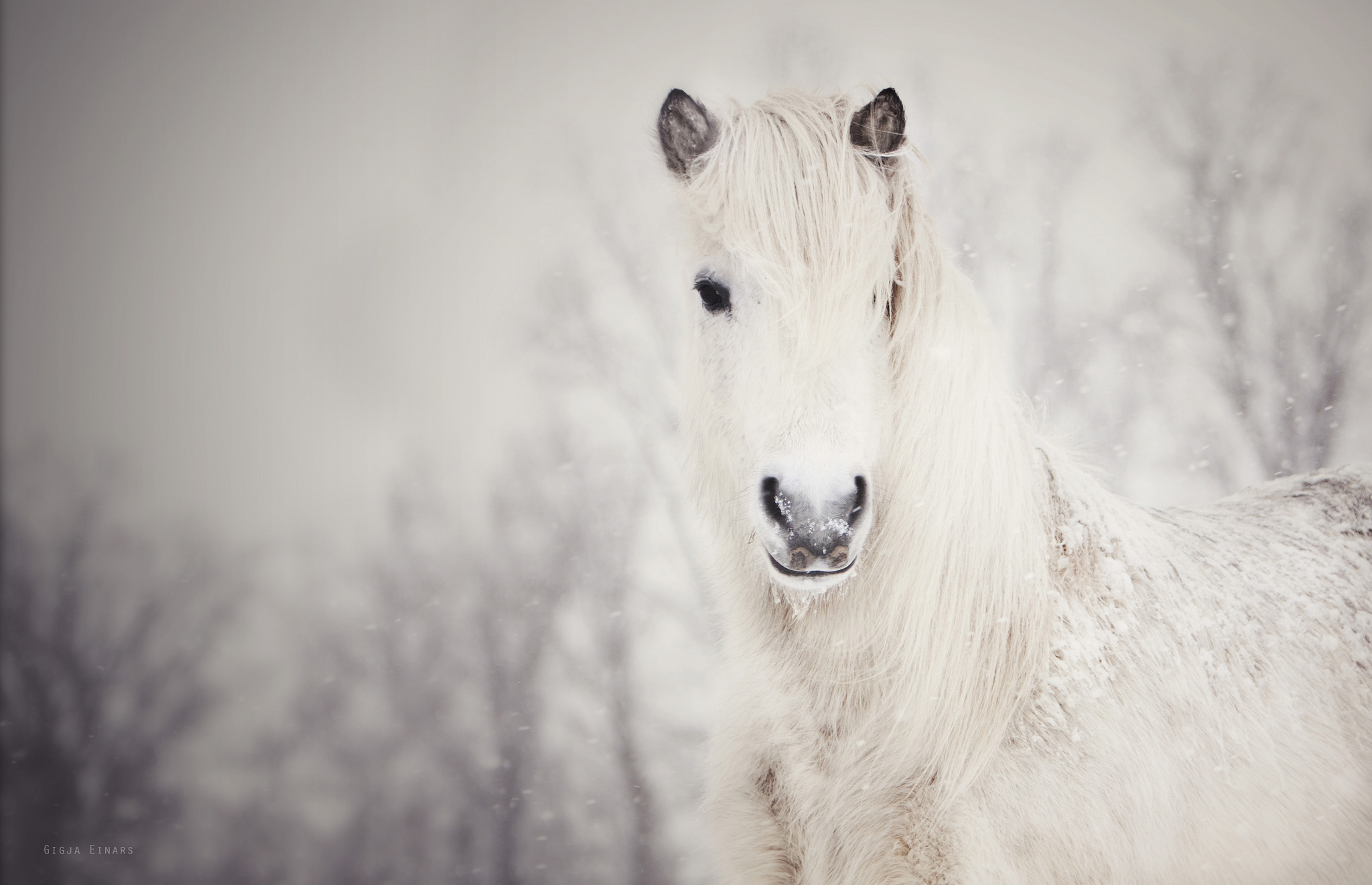 Wallpaper snowy white horse snow wallpapers animals   download 2048x1321