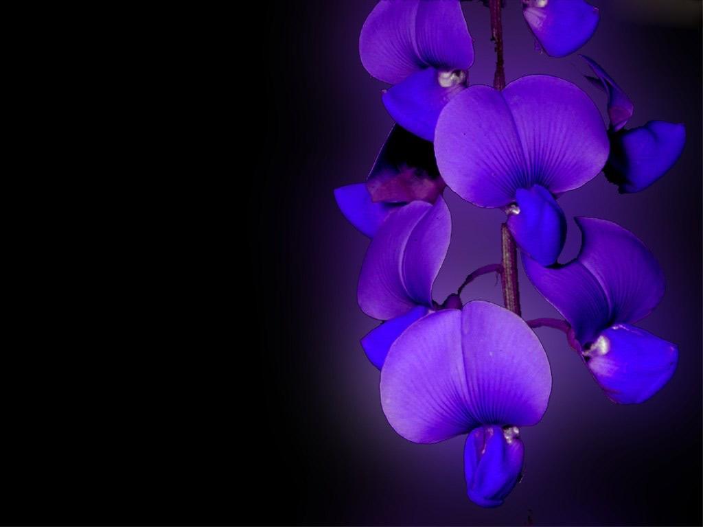 Orchid Flower Image Bg Wallpaper For Edit Es