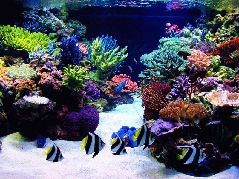 fish tank desktop wallpaper wallpapersafari