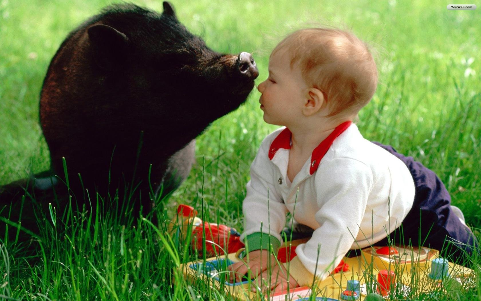 The Baby And Pig Wallpaper Wallpaperwallpapersfree 1680x1050