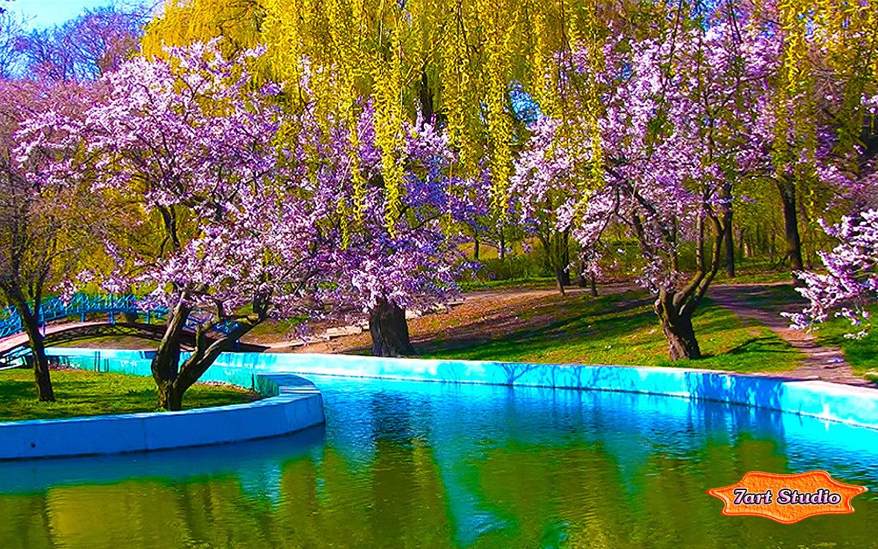 Spring Park Sakura Blossoms screensaver amp animated desktop 1280x800