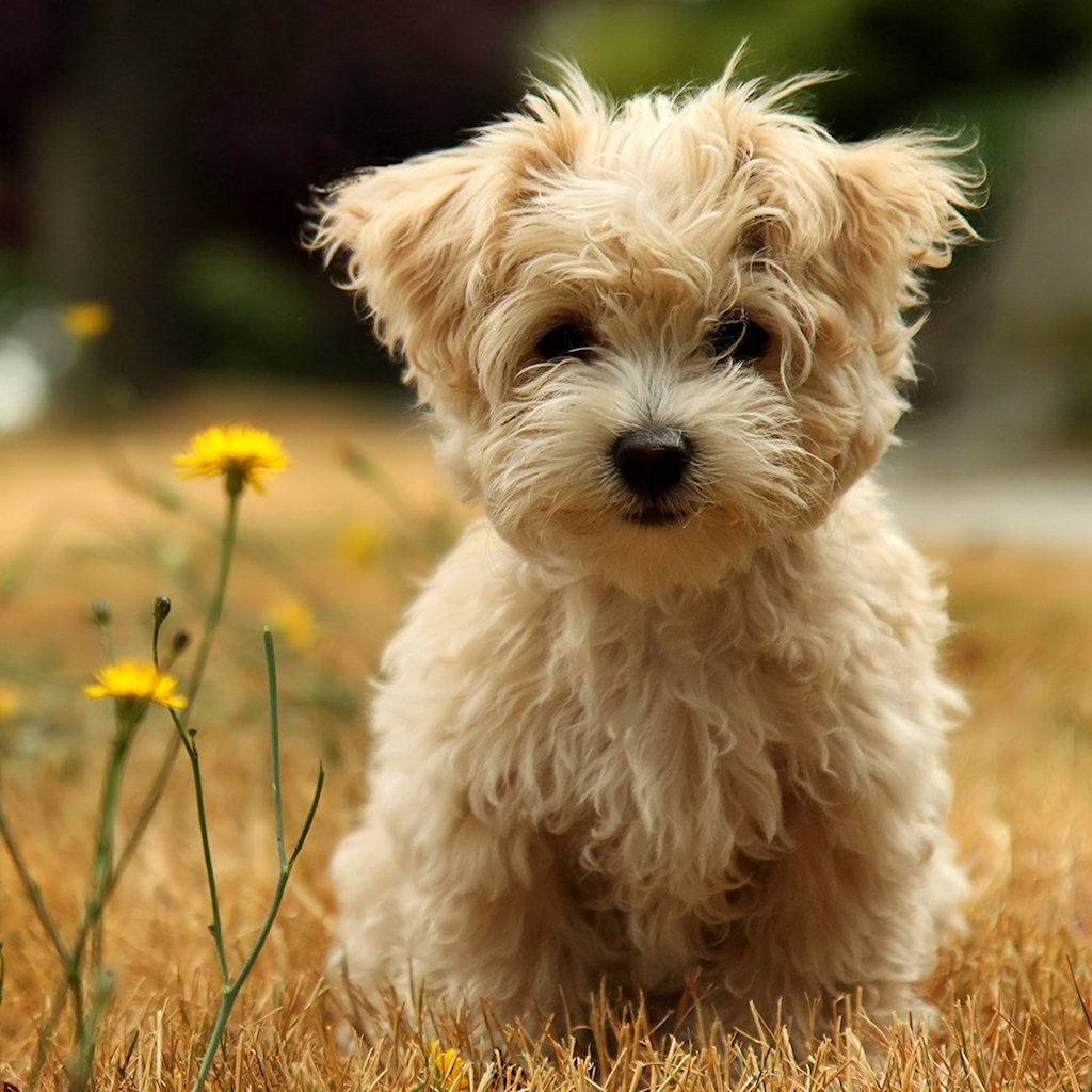 Zoo Park 8 Cute Puppies Wallpapers Cute Puppy Wallpapers for Desktop 1024x1024