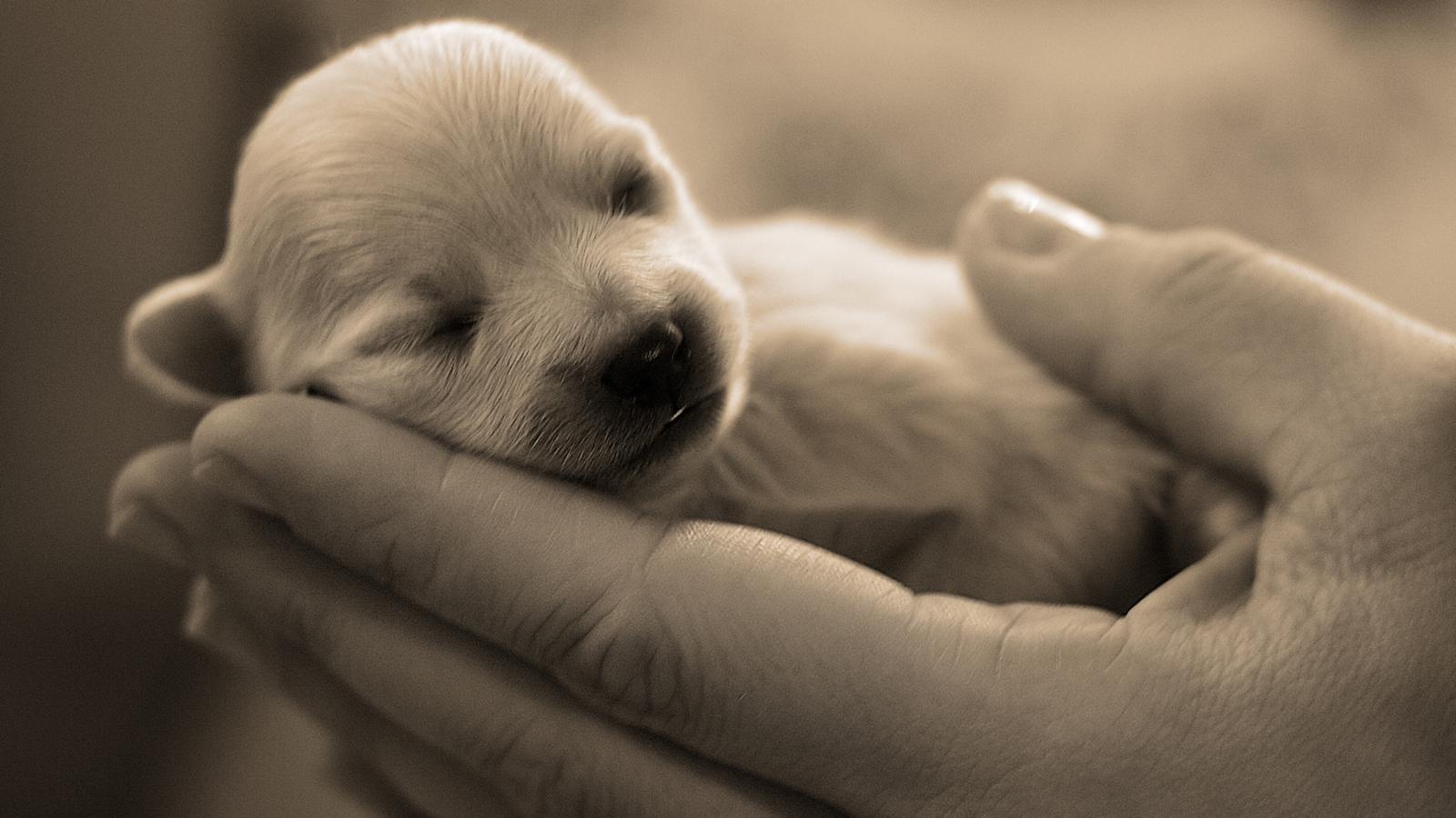 free cute puppy wallpaper 1600x900