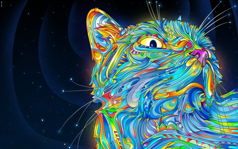 outer spacecats outer space cats rainbows trippy 1920x1200 wallpaper 800x500