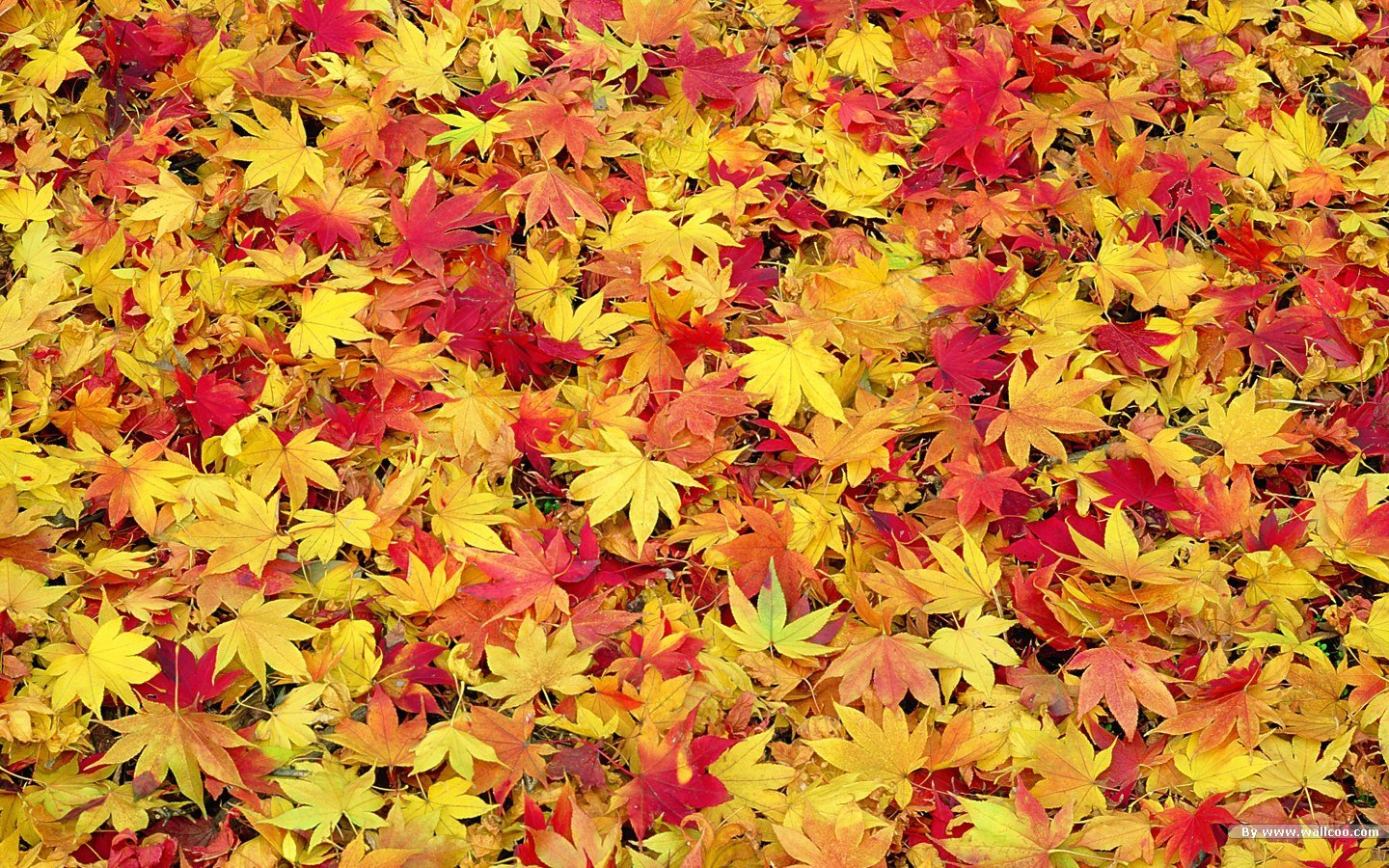 Free Desktop Wallpaper Autumn Leaves: Free Desktop Wallpaper Autumn Leaves