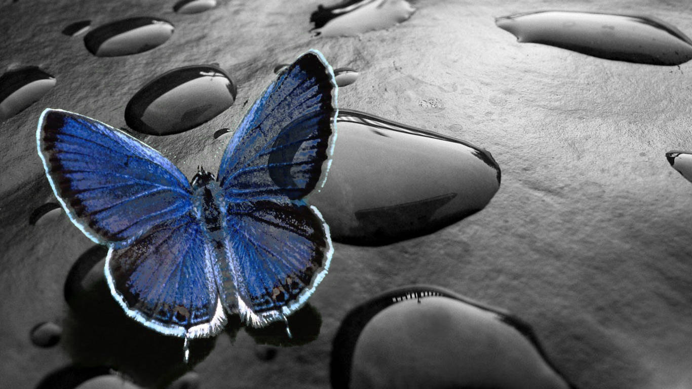 Cute 3D Butterfly Desktop Wallpapers