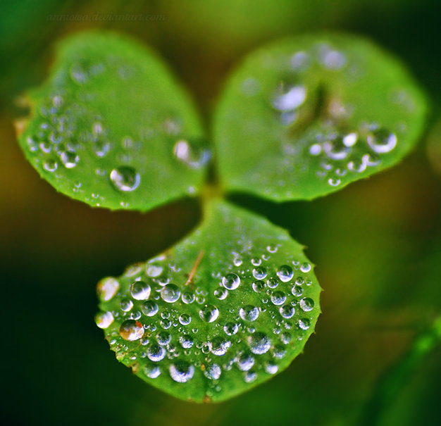 Irish Shamrock wallpaper   ForWallpapercom 626x605