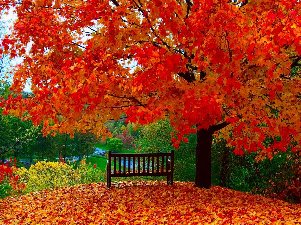 49+ Free Screensavers Wallpaper for Fall on WallpaperSafari