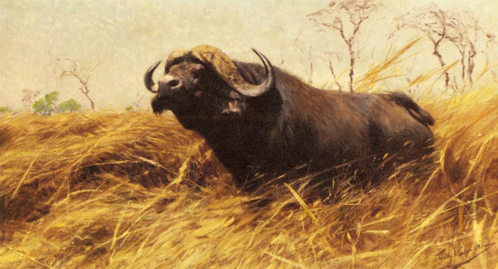 buffalo best full wallpapers Desktop Backgrounds for HD 1000x541