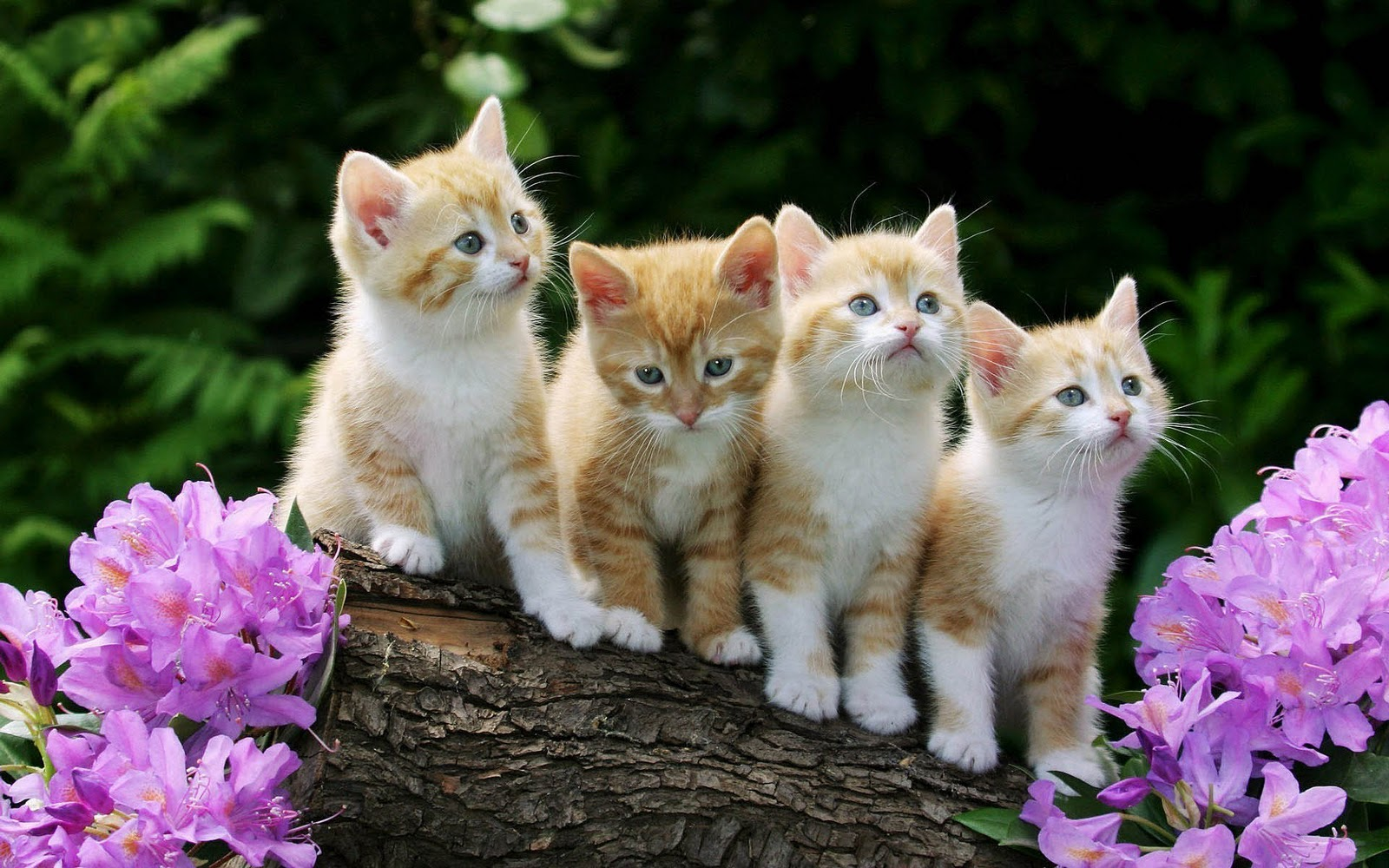 Kitten wallpaper for desktop wallpapersafari - Kitten backgrounds ...