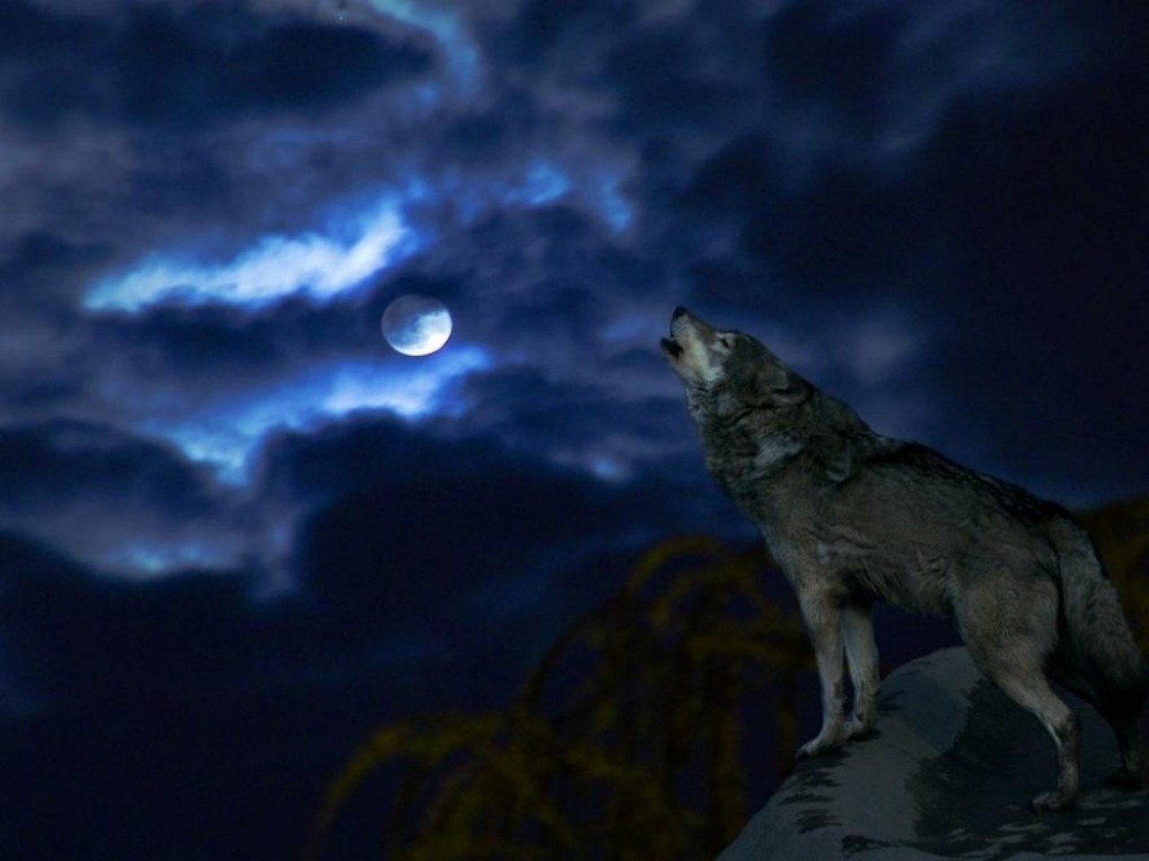 Wolf and Moon Wallpaper - WallpaperSafari