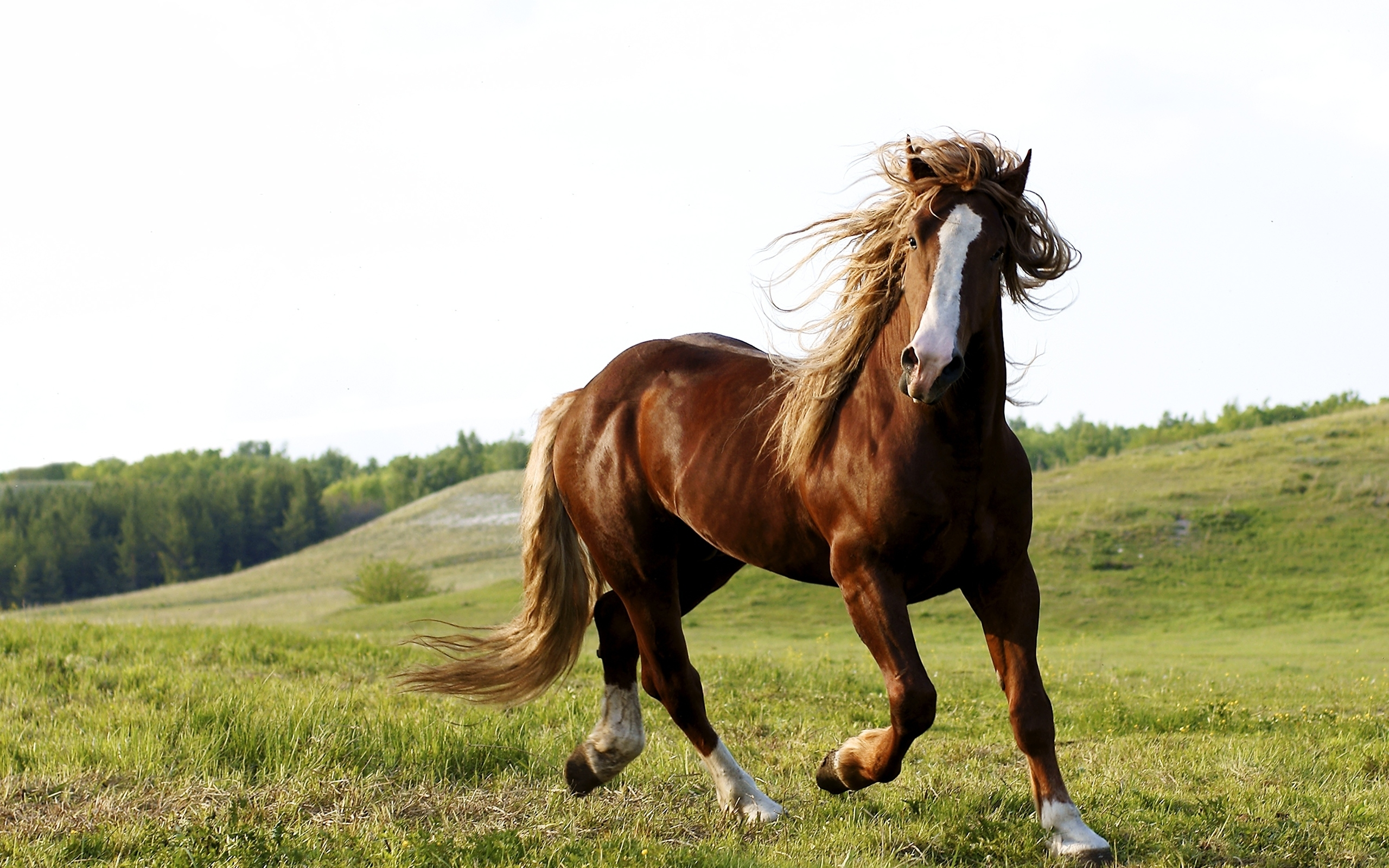 Free Download Animals Horses Riding A Horse 033632 Jpg 2560x1600