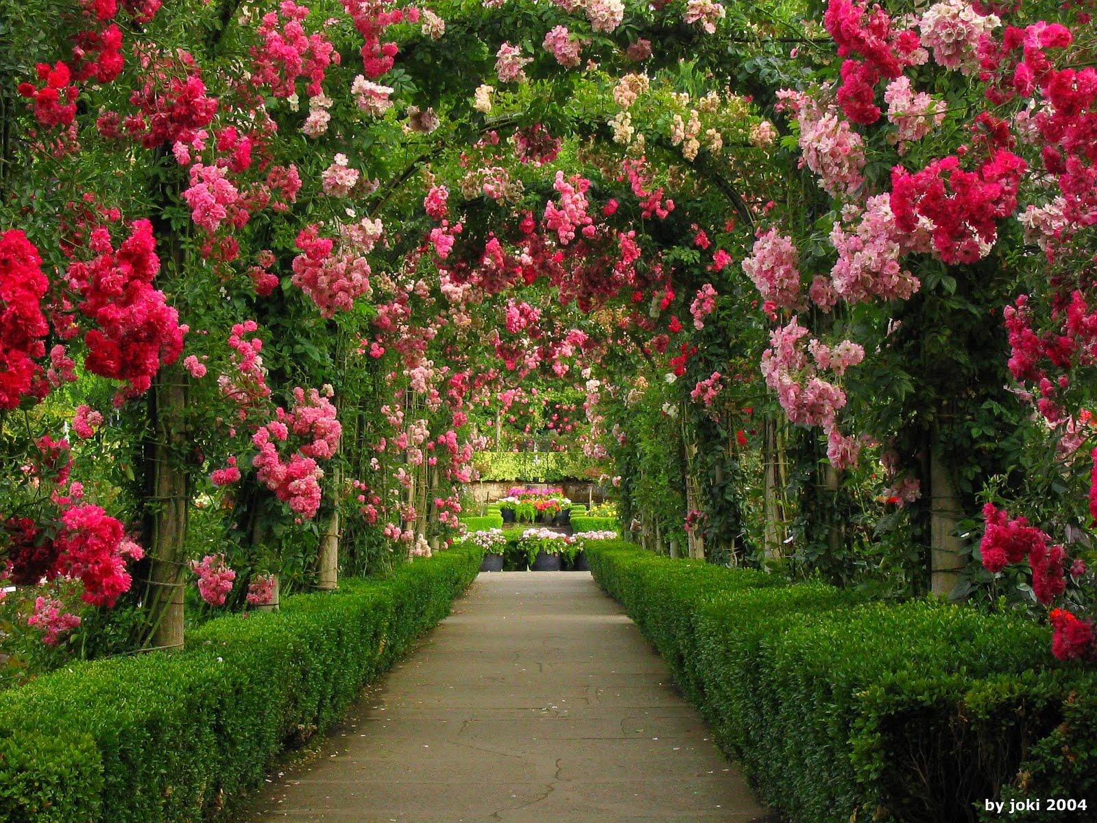 Free download Morada dos Gifs LINDOS GIFS DE ROSAS 3 [1600x1200] for your  Desktop, Mobile & Tablet   Explore 49+ Preacher of Roses on Wallpaper    Roses Wallpaper Desktop, Free Rose Wallpaper