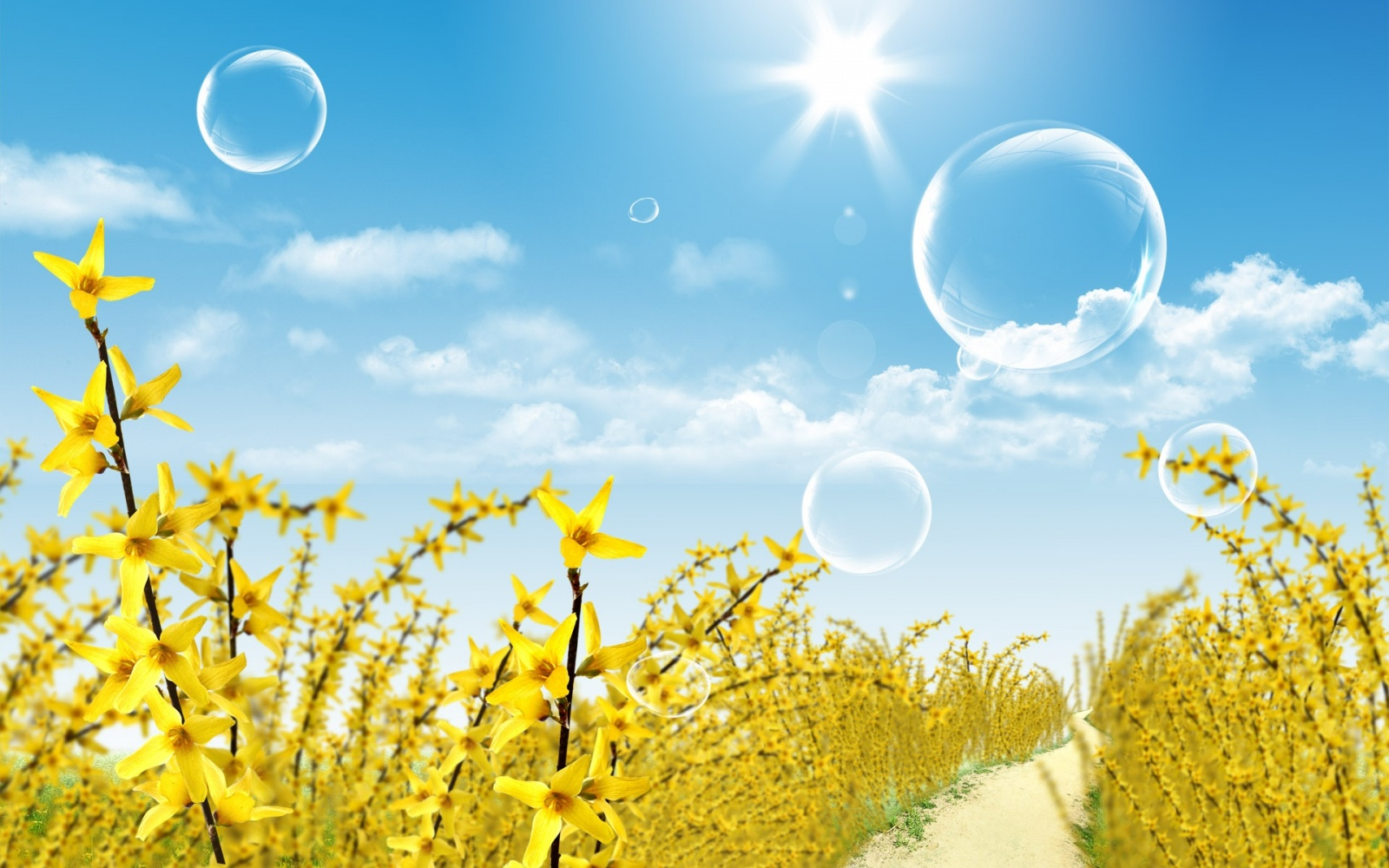 Beautiful Summer Wallpapers   8658 1600x1000