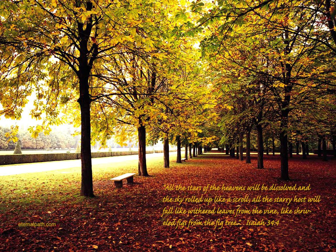 Fall Trees Wallpaper   Christian Wallpapers and Backgrounds 1152x864