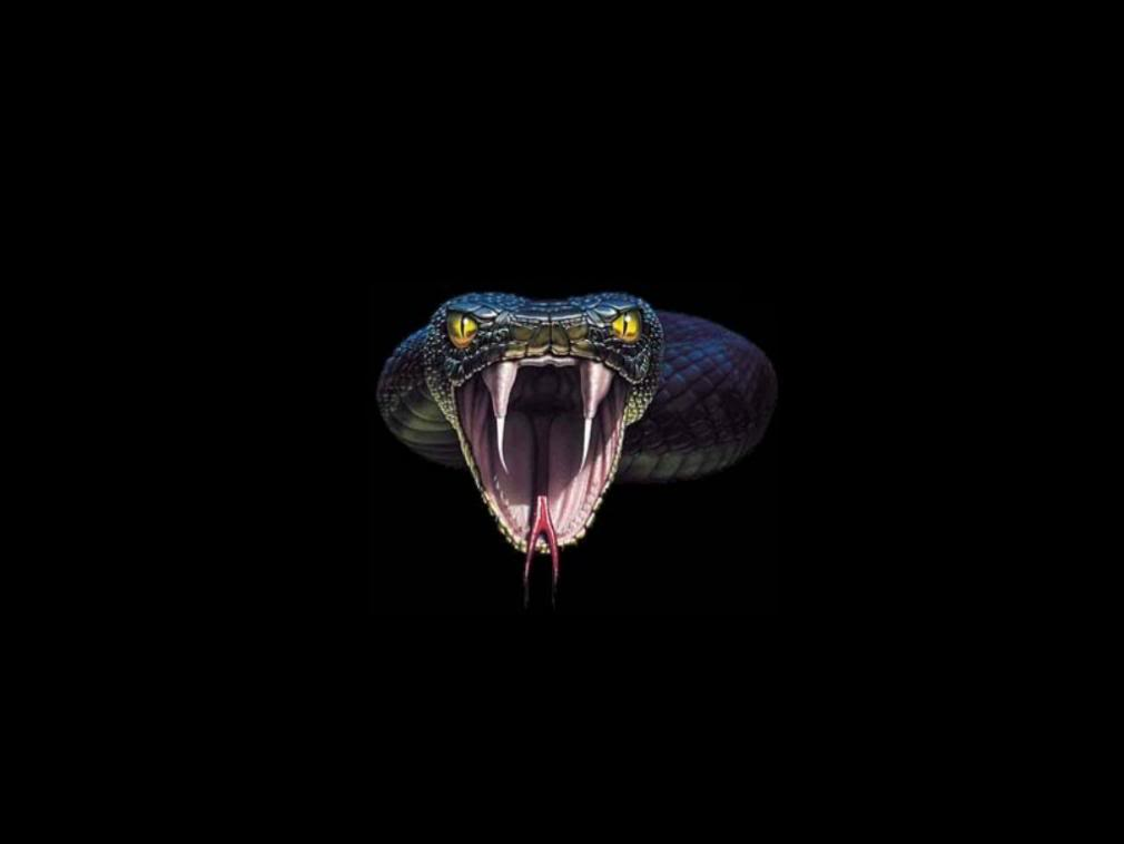 Snake Wallpapers High Definition WallpapersCool Nature Wallpapers 1010x758