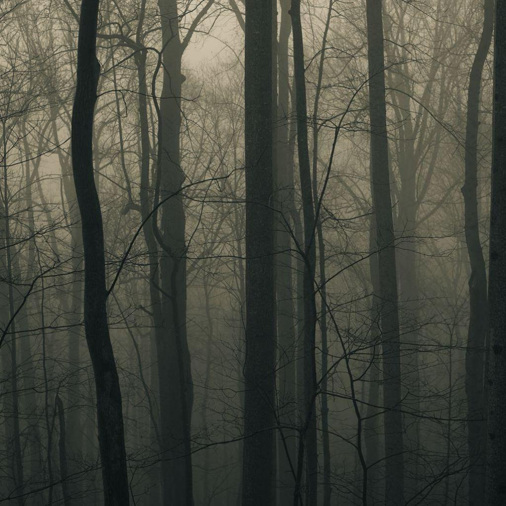 Foggy Forest iPad Wallpaper Download iPhone Wallpapers iPad 1024x1024