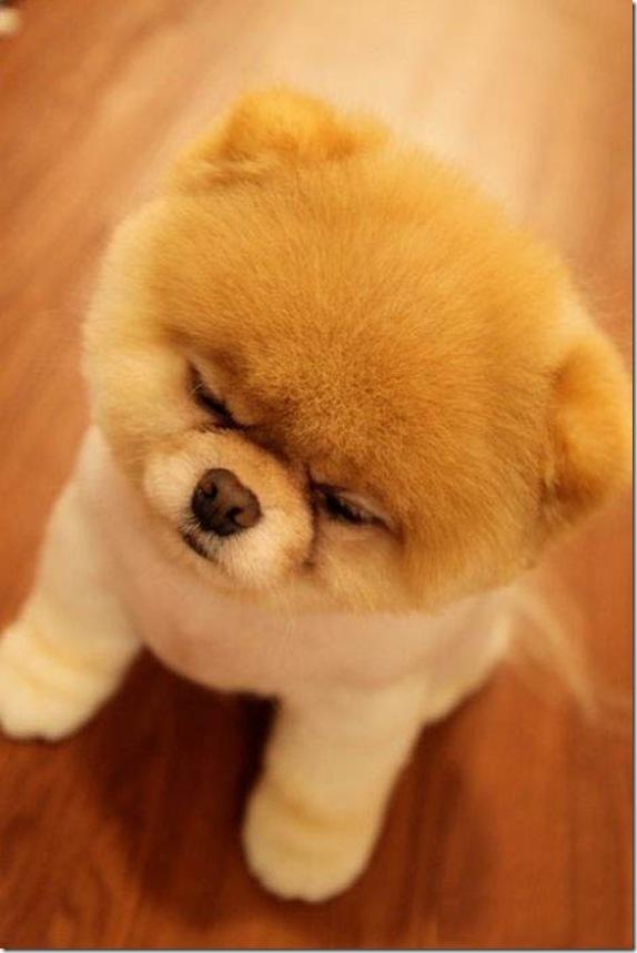 Boo Dog Wallpaper in Pixels 574x859