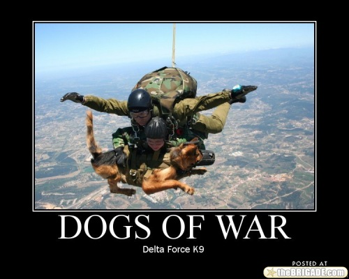 Oh your dog can shake hands 30 Photos k9 military 11 500x400