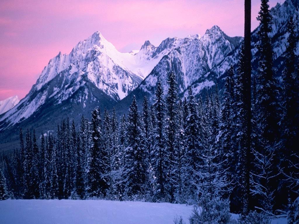 Winter wallpapers   Winter Wallpaper 2768471 1024x768