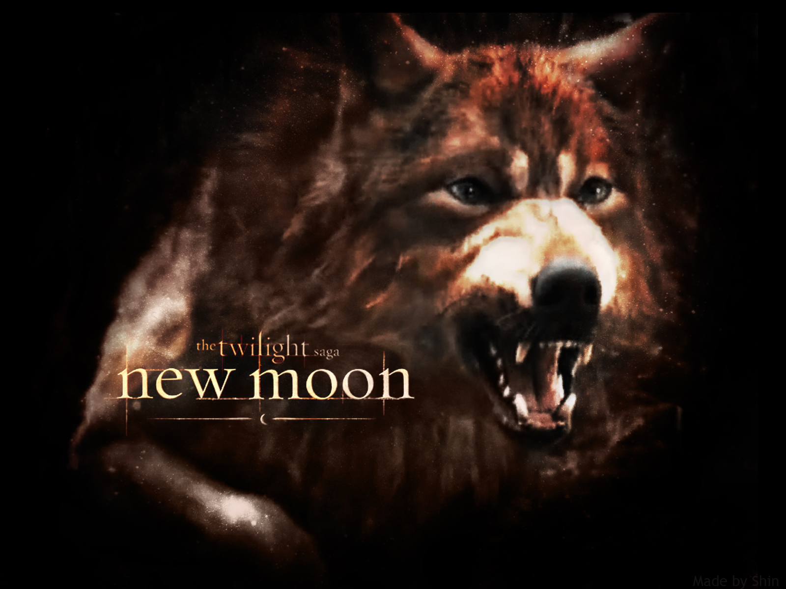 pix twilight wolf pack as wolves twilight wolf paul twilight wolf 1600x1200