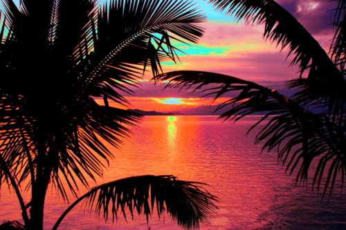 amazing beautiful colorful palm trees   image 618652 on Favimcom 500x333