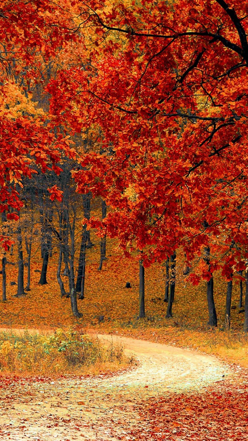 Download Beautiful Autumn Road Trees Pure 4K Ultra HD 950x1689