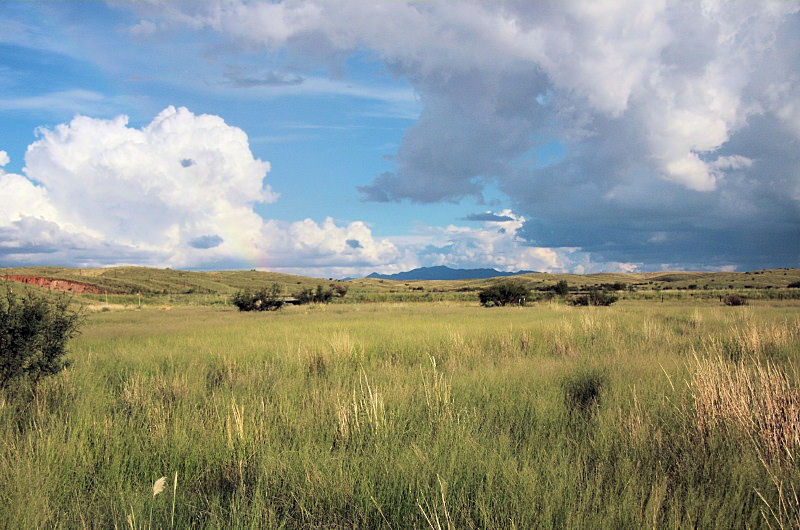 ... out over the grassland, the Huachuca Mountains are in the background